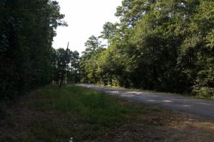 80 Acre Sam Houston Forest Recreational Tract in San Jacinto, TX (7 of 18)