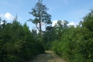 80 Acre Sam Houston Forest Recreational Tract in San Jacinto, TX (4 of 18)