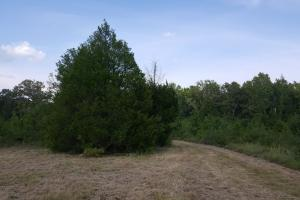 80 Acre Sam Houston Forest Recreational Tract in San Jacinto, TX (11 of 18)