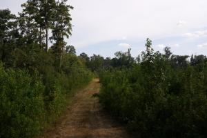 80 Acre Sam Houston Forest Recreational Tract in San Jacinto, TX (6 of 18)