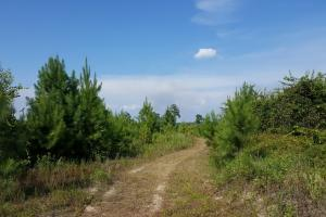 80 Acre Sam Houston Forest Recreational Tract in San Jacinto, TX (12 of 18)