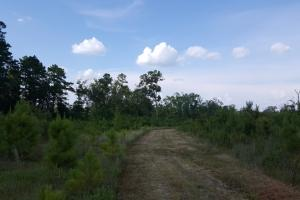 80 Acre Sam Houston Forest Recreational Tract in San Jacinto, TX (14 of 18)