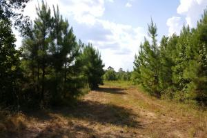 80 Acre Sam Houston Forest Recreational Tract in San Jacinto, TX (13 of 18)