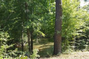 80 Acre Sam Houston Forest Recreational Tract in San Jacinto, TX (3 of 18)