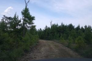 80 Acre Sam Houston Forest Recreational Tract in San Jacinto, TX (9 of 18)