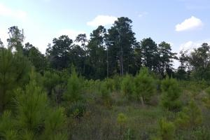80 Acre Sam Houston Forest Recreational Tract in San Jacinto, TX (15 of 18)