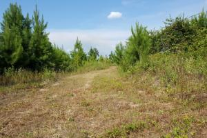 80 Acre Sam Houston Forest Recreational Tract in San Jacinto, TX (10 of 18)