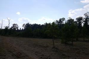80 Acre Sam Houston Forest Recreational Tract in San Jacinto, TX (17 of 18)