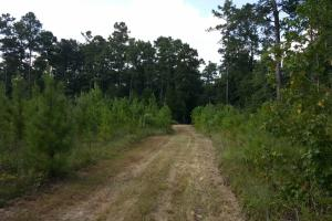 Sam Houston Forest Recreational/Development Tract - San Jacinto County TX