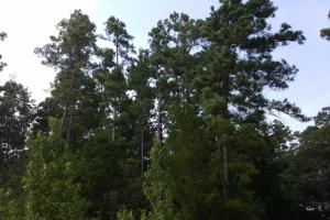 80 Acre Sam Houston Forest Recreational Tract in San Jacinto, TX (18 of 18)