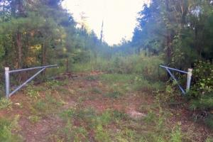 56 Acre Hunting Tract in Marion, GA (2 of 11)