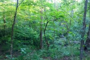 56 Acre Hunting Tract in Marion, GA (9 of 11)