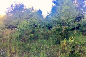 56 Acre Hunting Tract in Marion, GA (8 of 11)