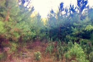 56 Acre Hunting Tract in Marion, GA (4 of 11)