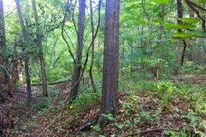 56 Acre Hunting Tract in Marion, GA (3 of 11)