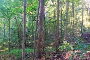 56 Acre Hunting Tract in Marion, GA (5 of 11)