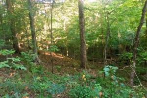 56 Acre Hunting Tract in Marion, GA (6 of 11)