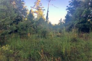 56 Acre Hunting Tract in Marion, GA (7 of 11)