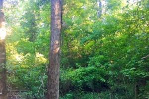 56 Acre Hunting Tract in Marion, GA (10 of 11)
