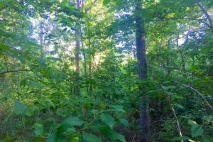 56 Acre Hunting Tract in Marion, GA (11 of 11)