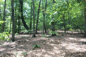 Mountain Recreational Homesite - Greenville County SC