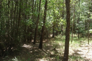 Greensboro Timber & Hunting Investment - Hale County AL
