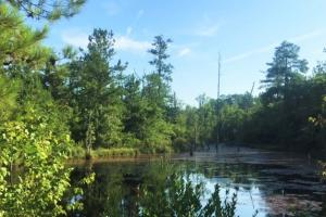 Hunting Property with Pond - Marion County GA