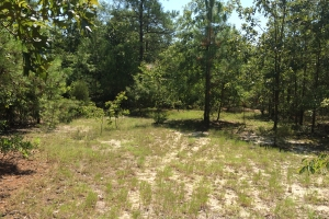 Batesburg Hunting Land & Residential Acreage - Aiken County SC