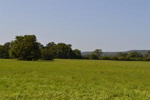 261 Acre Cattle Farm & Recreational Property - Franklin County AR