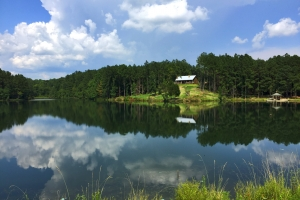 Jackson McVay Lake & Lodge Tract - Clarke County AL