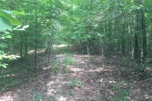 40 Acre Crowley's Ridge Timberland & Deer Hunting - Saint Francis County AR