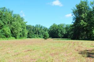 North Greenville Homesite or Mini Farm - Greenville County SC