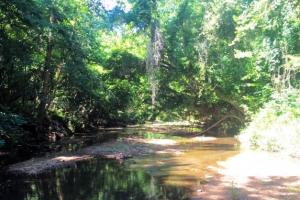 Hunting, Homesite, or Investment Tract in Muscogee, GA (10 of 14)