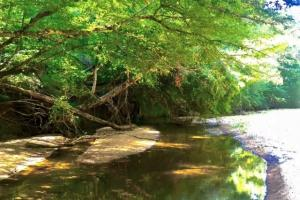 Hunting, Homesite, or Investment Tract in Muscogee, GA (12 of 14)