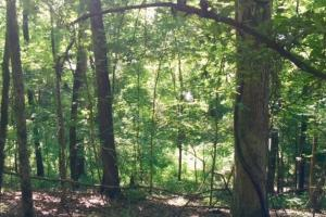 Hunting, Homesite, or Investment Tract in Muscogee, GA (13 of 14)