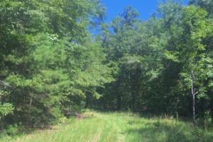 Hunting, Homesite, or Investment Tract in Muscogee, GA (2 of 14)