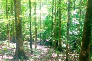 Hunting, Homesite, or Investment Tract in Muscogee, GA (3 of 14)