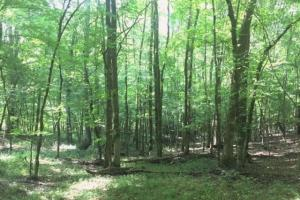 Hunting, Homesite, or Investment Tract in Muscogee, GA (4 of 14)