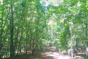 Hunting, Homesite, or Investment Tract in Muscogee, GA (7 of 14)