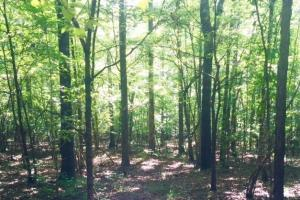 Hunting, Homesite, or Investment Tract in Muscogee, GA (8 of 14)
