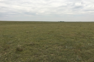 Grassland For Sale El Paso County, CO - El Paso County CO