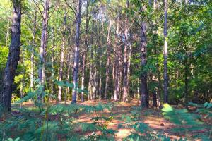 Upper Bethune Recreational Tract - Kershaw County SC