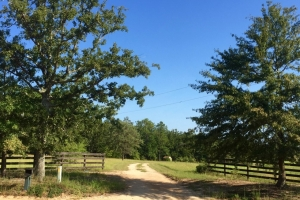 Land for Sale in Georgia