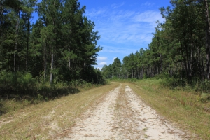 Large Acreage Investment Property - Dorchester County SC