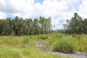 Homesite or Mini Farm Tract - Georgetown County SC