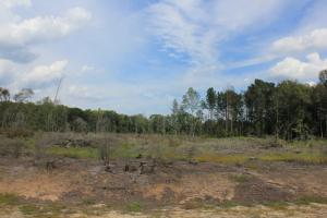 Branchville Recreational Timber Investment  - Orangeburg County SC