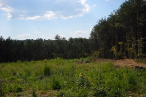 Concord Recreation & Timber Investment - Jefferson County AL