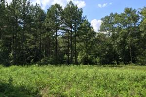 The Buckatunna Creek Quitman Tract in Clarke, MS (22 of 24)