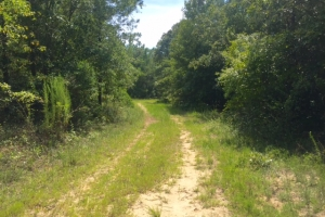 Hunting and Timber Tract with House - Schley County GA