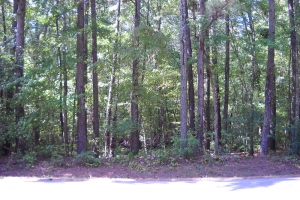 Dry Creek Investment Property - Saint Clair County AL